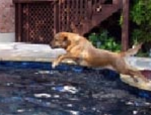Dog Testimonials – Lili