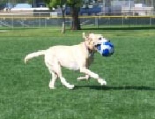 Dog Testimonials – Bart