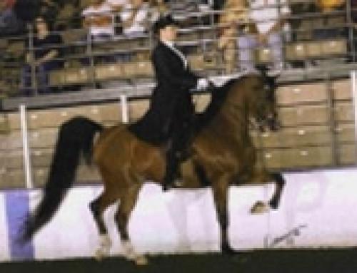 Horse Testimonials – CP Merritt
