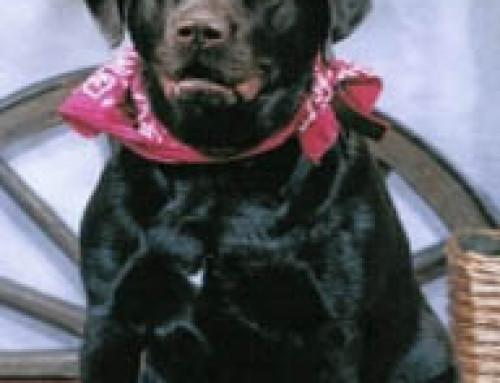 Dog Testimonials – Granite