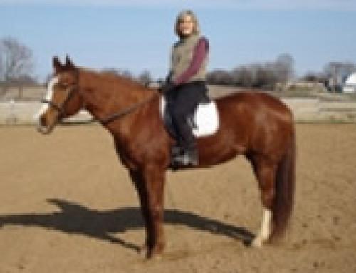 Horse Testimonials – Rob